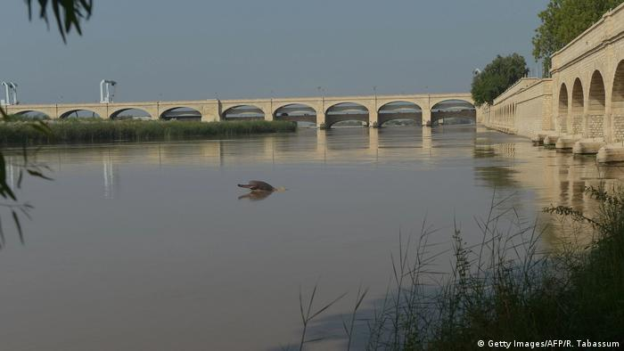 A dolphin swims along Pakistan's Indus river shared with India