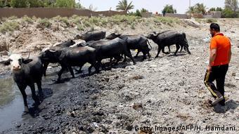 Un pastor en Irak lleva a su búfalo a beber agua al lecho de un río vacío. El país ha visto estallar protestas, en parte por la falta de recursos, entre ellos el agua.