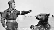 Zweiter Weltkrieg der Bär Wojtek kämpfte gegen die Nazis