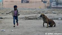 (FILES) In this file photo an Indian child runs past a dog in a slum area close to the Taj Mahal in Agra, ahead of US President Barack Obama's visit January 25 to 27, 2015. - The idea that animals can experience love was once anathema to the psychologists who studied them, seen as a case of putting sentimentality before scientific rigor. (Photo by Chandan KHANNA / AFP)