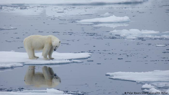 A polar bear on an ice floe surrounded by water
