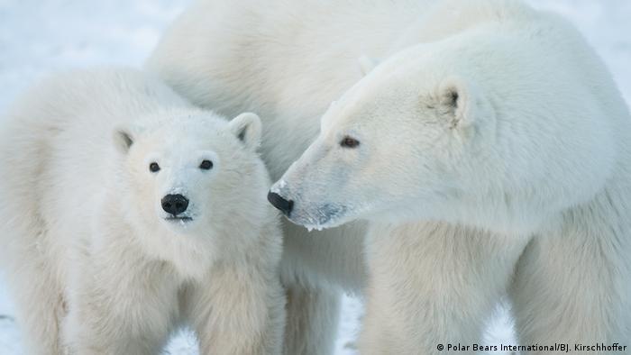 Una madre osa polar y su hijo.