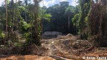 Goldabbau im Amazonas