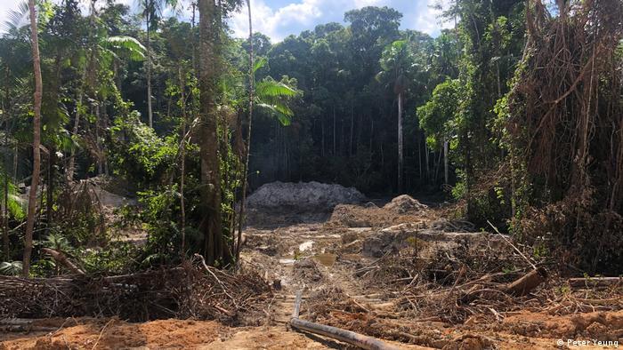 Abgeholzter Regenwald mit braunem Boden und blauem wolkigen Himmel