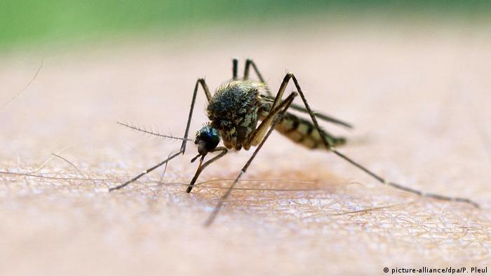 هل يمكن القضاء على مرض الملاريا