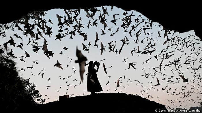 A woman makes noise as she directs the bats away