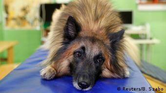 Собака участвует в лабораторном эксперименте в Будапеште