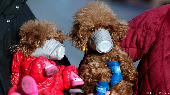 Dogs in China wearing masks to protect against coronavirus