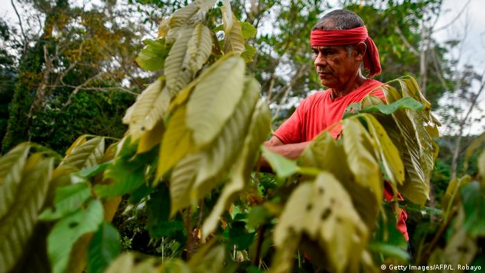 Coca farmer in Colombia