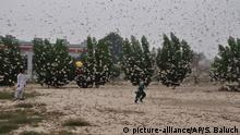 13.11.2019, Rahimyar Khan, Pakistan, Pakistani children try to avoid locusts swarming in Rahimyar Khan, Pakistan, Wednesday, Nov. 13, 2019. Swarms of locusts descended in multiple localities including city areas as well as farmlands of Pakistan's Sindh Province. (AP Photo/Siddique Baluch)