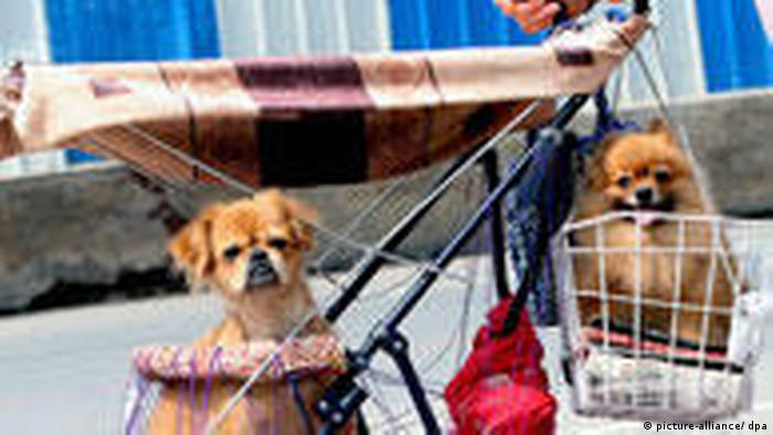 Hunde im Kinderwagen