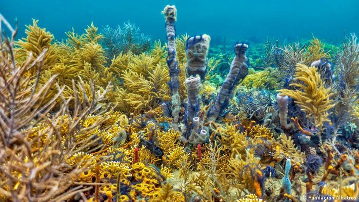 Das Mesoamerican Reef in Guatemala (Fundación Albatros)