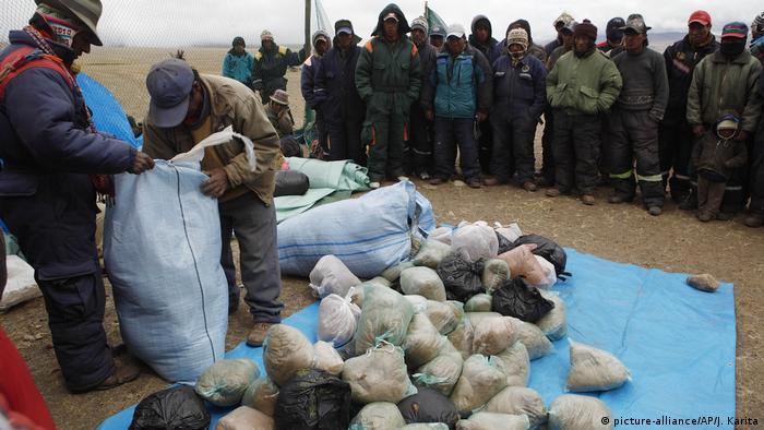 Bolivien Vikunja-Tiere (picture-alliance/AP/J. Karita)