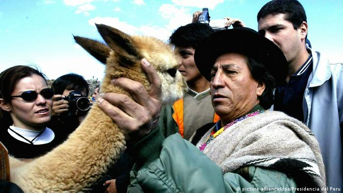 Bolivien Vikunja-Tiere (picture-alliance/dpa/Presidencia del Peru)