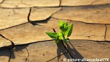 Symbilbild   Pflanze wächst durch trockenen rissigen Boden