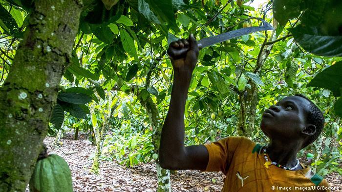 Elfenbeinküste   Junger Kakaoplantagenarbeiter in Guezon