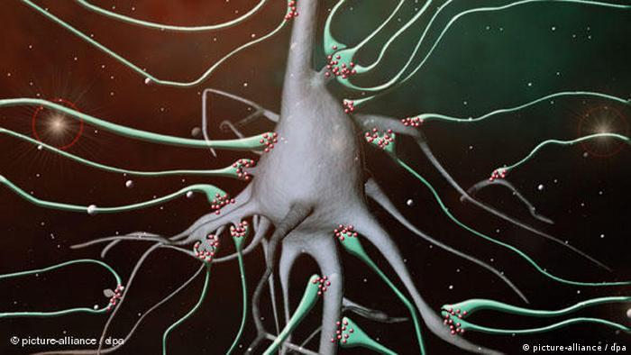 Synapse im Gehirn