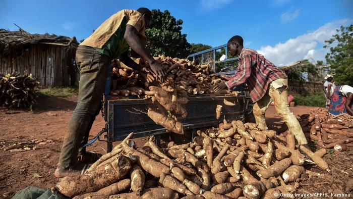 Men unload cassava from a truck in Ivory Coast