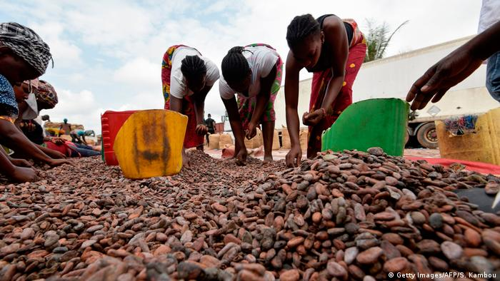Women sorting cocoa beans