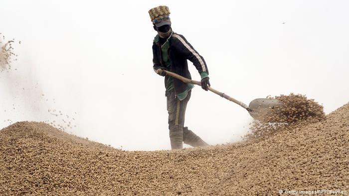BG Wasserverbrauch Anbauprodukte Afrika | Erdnüsse im Senegal (Getty Images/AFP/Seyllou)