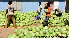 BG Wasserverbrauch Anbauprodukte Afrika | Wassermelonen im Senegal