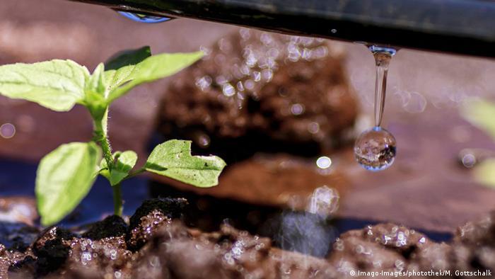 BG Wasserverbrauch Anbauprodukte Afrika | Bewässerung in Kenia (Imago-Images/photothek/M. Gottschalk)