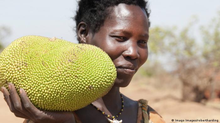 BG Wasserverbrauch Anbauprodukte Afrika | Ugana Jakobsfrucht (Imago Images/robertharding)