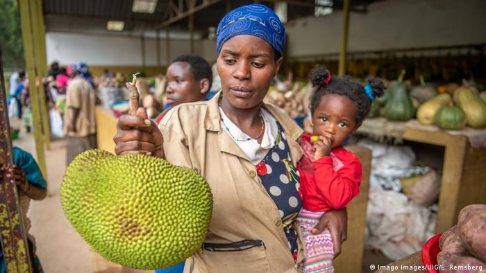 BG Wasserverbrauch Anbauprodukte Afrika   Ugana Jakobsfrucht (Imago Images/UIG/E. Remsberg)