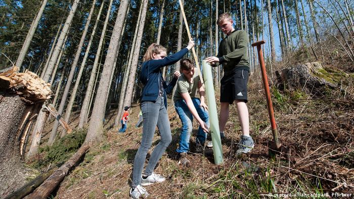 Para siswa/i mengamankan tempat untuk pohon baru di Jerman
