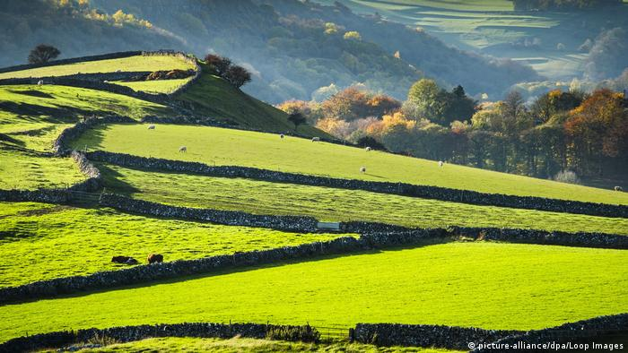 A sweeping view of bright green English countryside