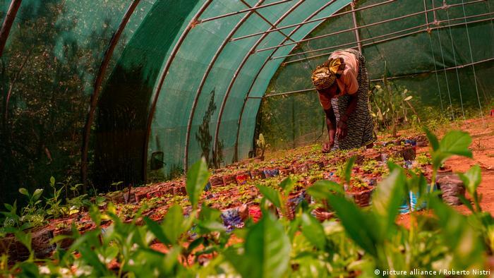 Seorang wanita sedang membungkuk di atas pot tanaman