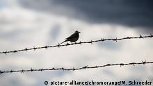Vogel auf Stacheldraht