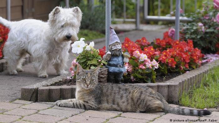 A West Highland white terrier and a cat in a garden (picture-alliance/dpa/P. Faber)