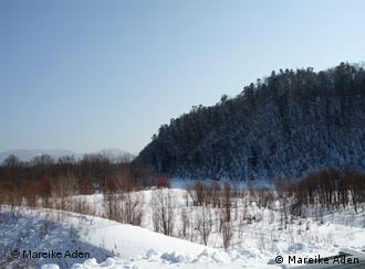 Estampa aparentemente idílica: este bosque está amenazado.
