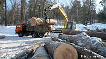 Lumberjacks at work with a pile of tree trunk in the foreground