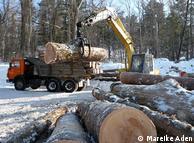 Máquinas potentes: durante horas, árvores são empilhadas