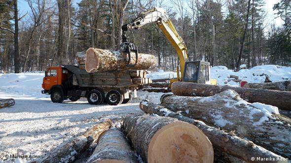 Holzfäller im Bikin Tal in Russland