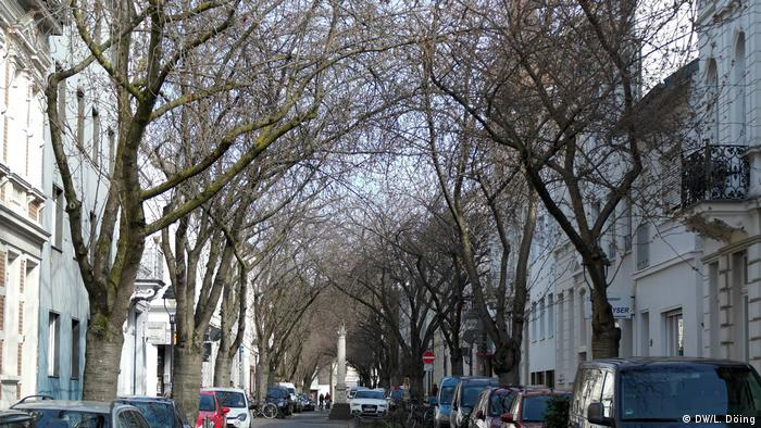 On Bonn's Heerstrasse, no blossoms are to be seen yet (DW/L. Döing)