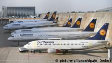 Lufthansa jets at the Frankfurt Airport