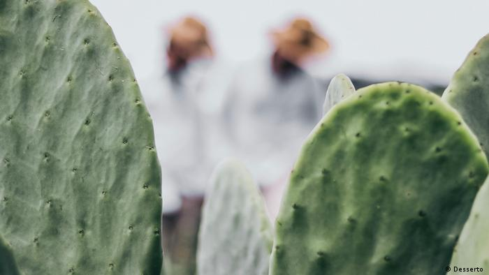 The cactus used for the world's first vegan leather
