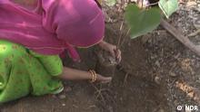 Global Indien Bäume für Mädchen