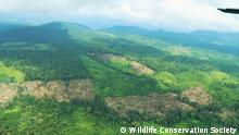 Pressebild Wildlife Conservation Society | Wald
