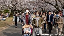 Coronavirus Japan Tokio Ueno Park Besucher bestaunen Kirschblüten