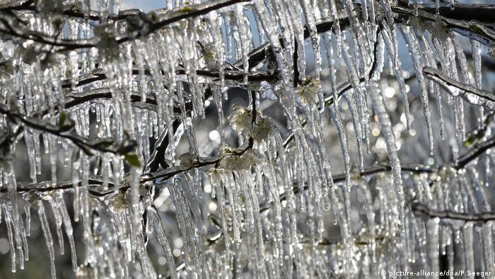 Después de temperaturas de más de 20° C, el invierno ha vuelto a Alemania por unos días. El sol brilla, pero especialmente las noches son heladas. Esto es de particular interés para los productores de frutas. Las plantas que ya han brotado pueden ser dañadas por la helada tardía, como estos cerezos, que por fueron rociados con agua, ya que las gotas liberan calor al congelarse, y eso los protege.