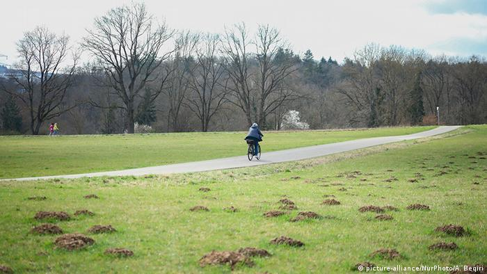 Person riding a bike through a park