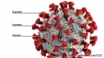 coronavírus no microscópio