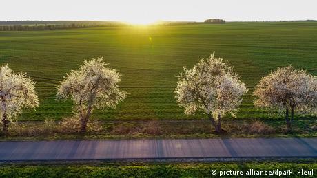 Ο ήλιος, ο οποίος είναι ιδιαίτερα χαμηλά την άνοιξη, φωτίζει τα τοπία και κάνει τα οπωροφόρα δέντρα να ανθίζουν. Όπως εδώ στο Χοενγέζαρ, μια μικρή πόλη που δεν απέχει πολύ από τα γερμανοπολωνικά σύνορα.