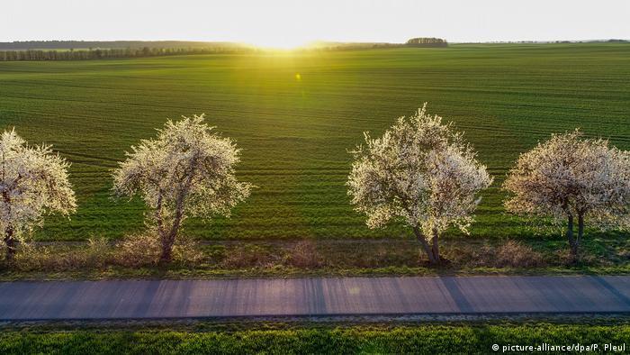 Село Гоенєзар неподалік від польсько-чеського кордону