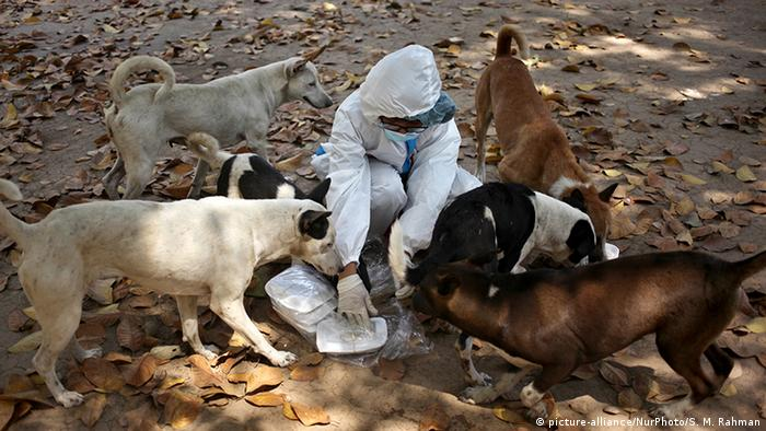 A volunteer dressed in protective gear feeds dogs in Dhaka (picture-alliance/NurPhoto/S. M. Rahman)