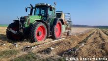 Deutschland Arzdorf, NRW | Coronavirus | Erntevernichtung Erdbeeren (DW/J. Ospina-Valencia)